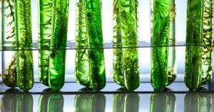 micro-algues-oxygene