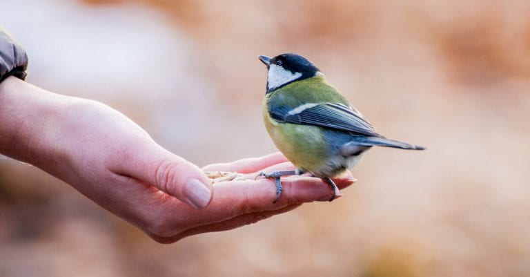 sauver-les-oiseaux