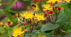 alerte-biodiversite