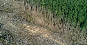 arbres-deforestation