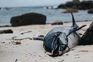 massacre-dauphins