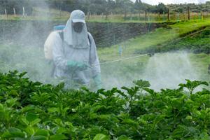disparition-insectes-pesticides