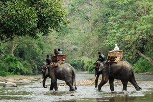 elephants-asie