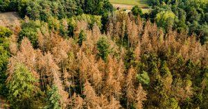 arbres-extinction